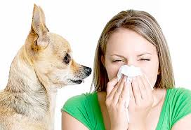 allergies from dirty air ducts
