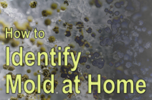 How to identify mold at home