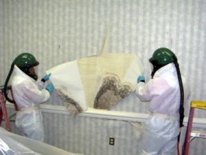 cleaning mold behind wall paper