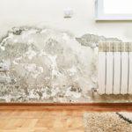 Mold growth on walls
