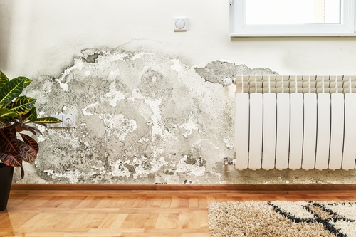 How to Identify Mold in Your Home