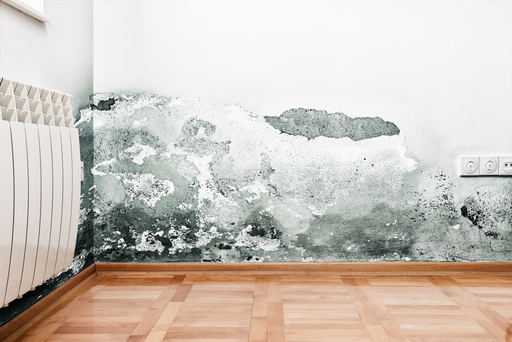 Mold growth on home walls