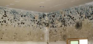 Aura mold remediation