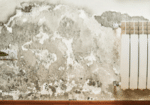 Mold-remediation-and-removal
